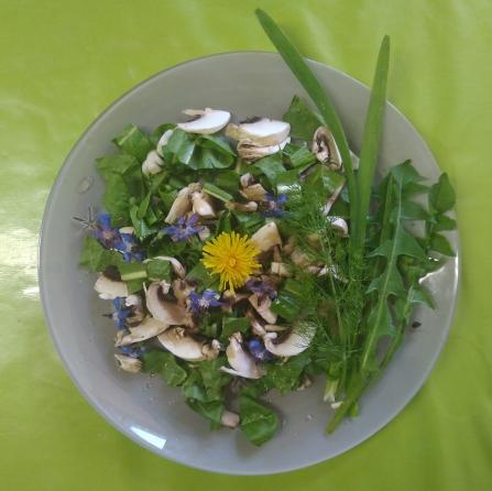 Salade sauvage aux fleurs de bourrache